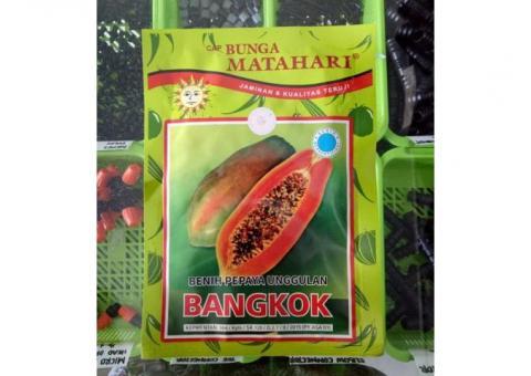 Benih Pepaya Bangkok
