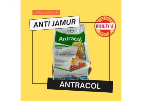 Antracol Fungisida Obat Anti Jamur